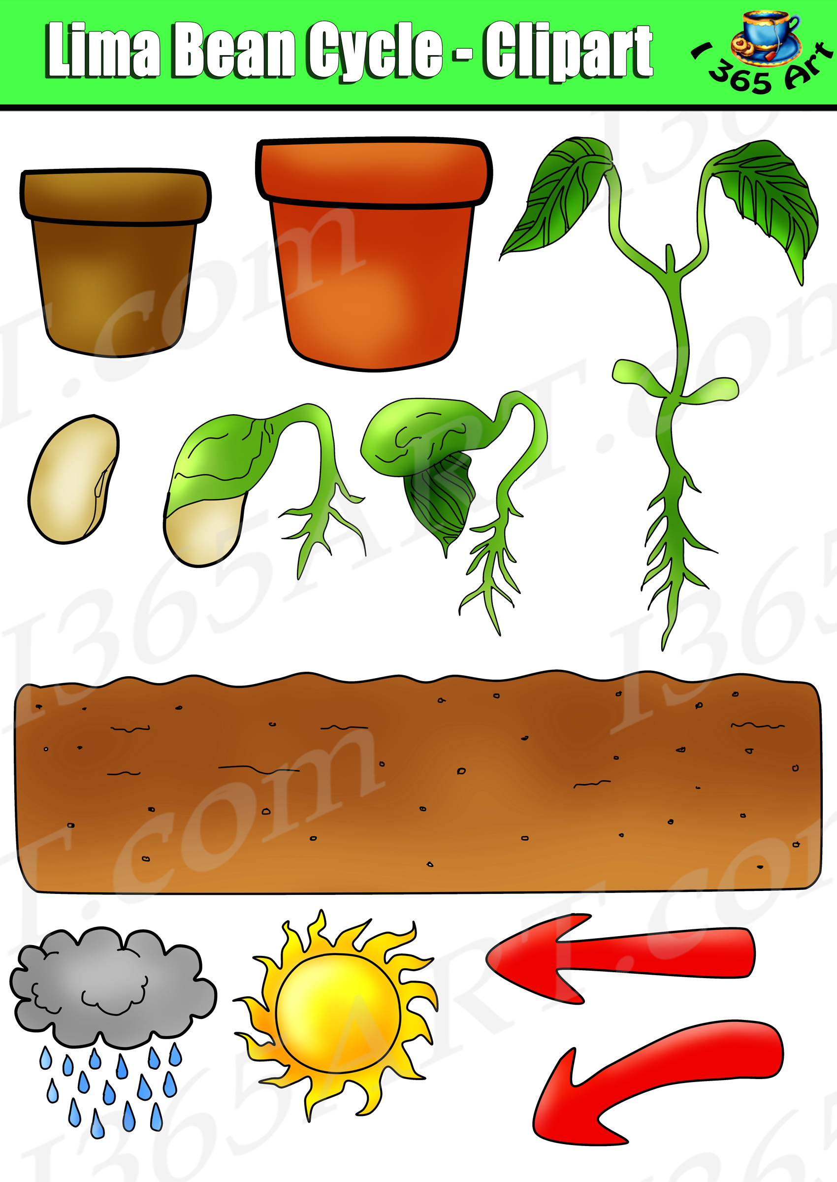 Life Cycles besides Life Cycle Of Chicken furthermore Watch as well Definition Of Annual Plants 2132403 besides respond. on plant life cycle kids