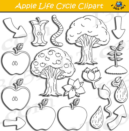 apple life cycle clipart black and white