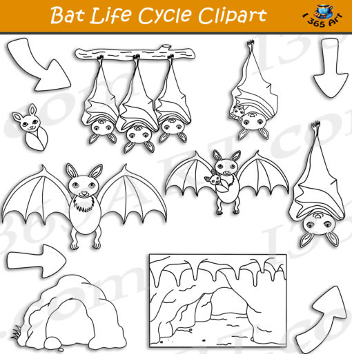 bat life cycle clipart black and white