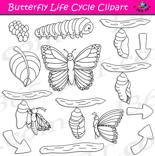 butterfly life cycle clipart black and white