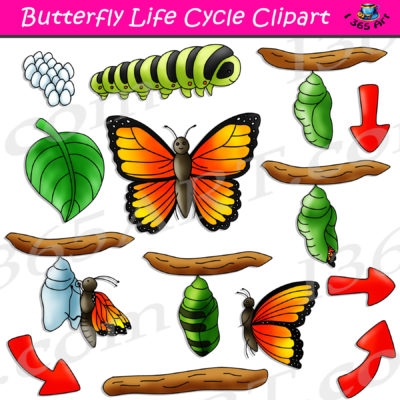 butterfly life cycle clipart