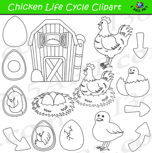 Chicken Life Cycle Clipart Black and White