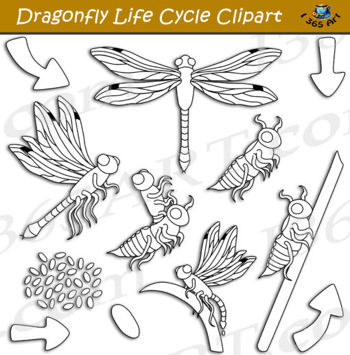 dragonfly life cycle clipart black and white