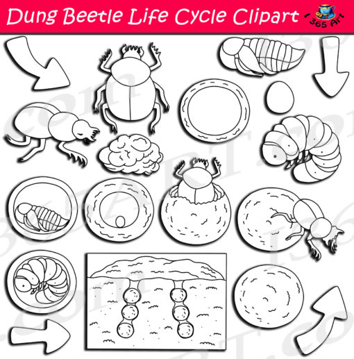 dung beetle life cycle clipart black and white