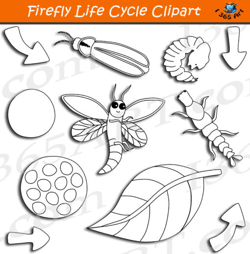 firefly life cycle clipart black and white