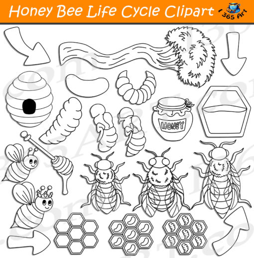 honey bee life cycle clipart black and white