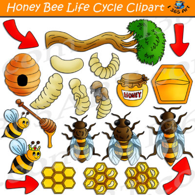 honey bee life cycle clipart
