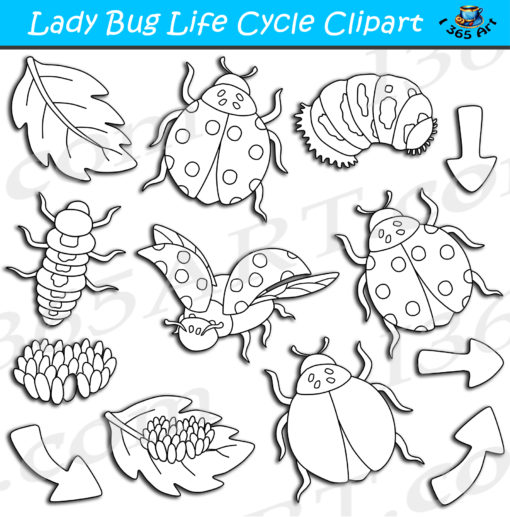 ladybug life cycle clipart black and white