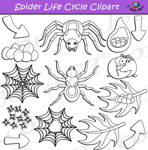 spider life cycle clipart black and white