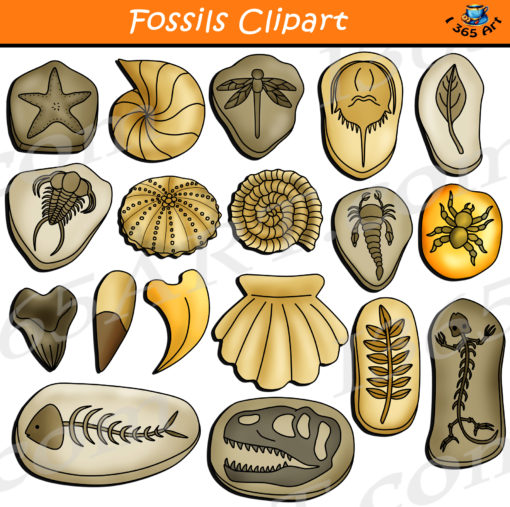 fossils clipart