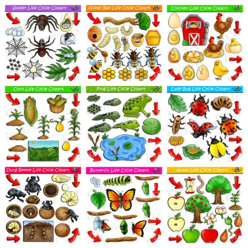 nature life cycle clipart bundle preview 1