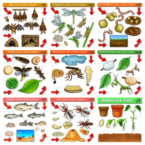 nature life cycle clipart bundle preview 2