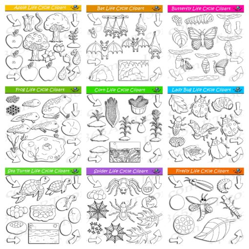 nature life cycle clipart bundle preview 3