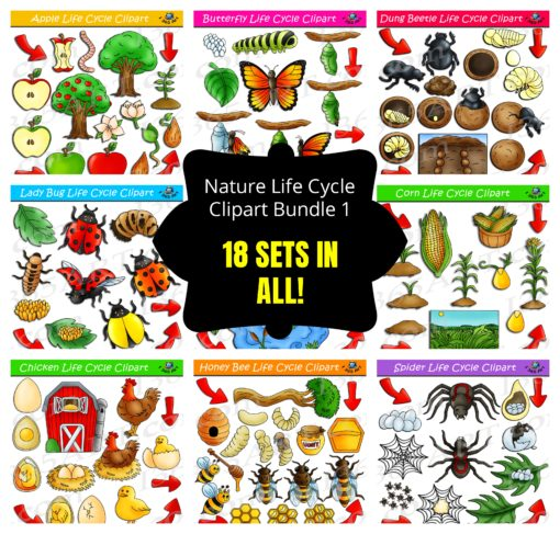 nature life cylcle clipart