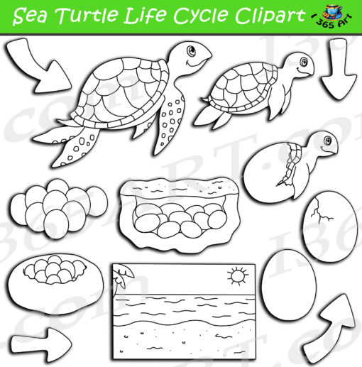 sea turtle life cycle clipart black and white