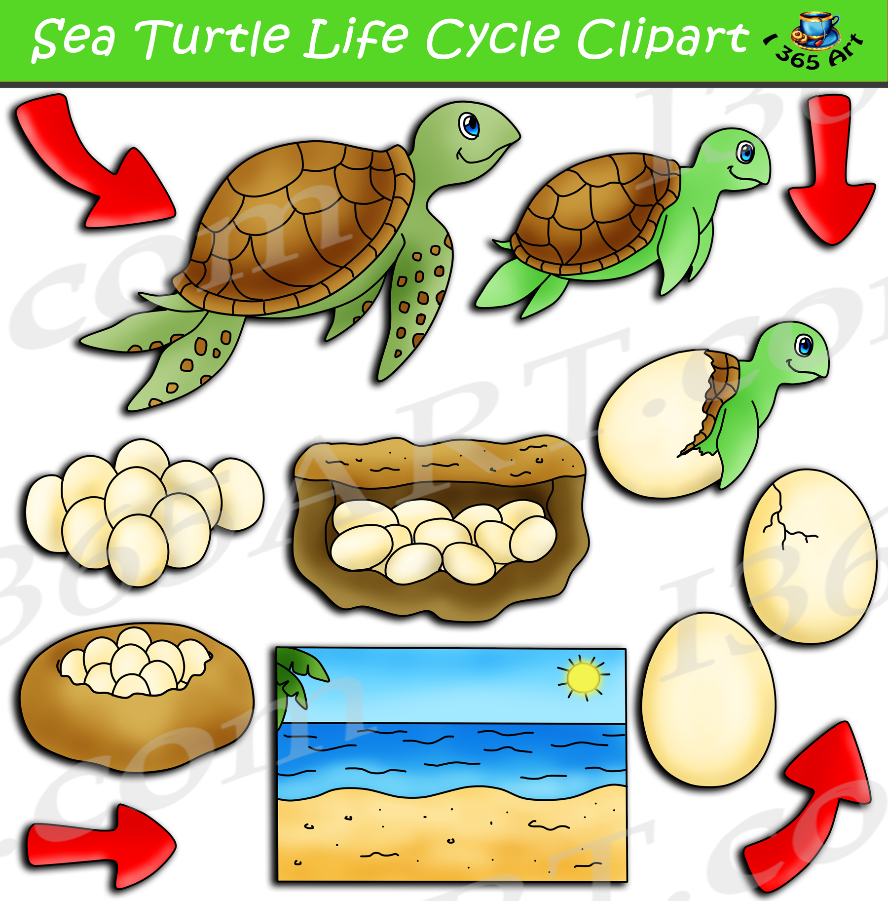 Sea Turtle Life Cycle Clipart Pack Clipart 4 School