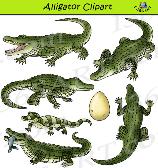 alligator clipart