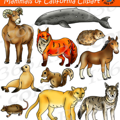 California mammals clipart