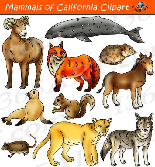 California mammals clipart