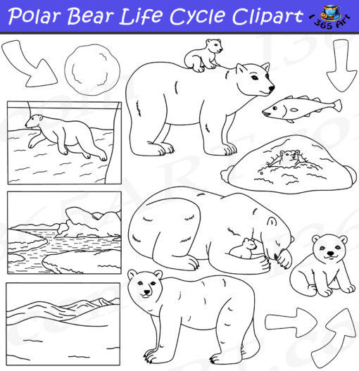 Polar bear life cycle clipart black and white
