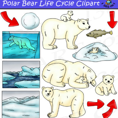 Polar bear life cycle clipart