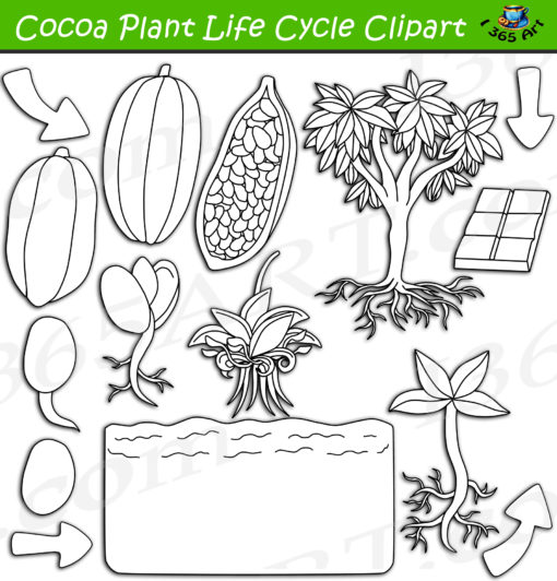Cocoa plant life cycle clipart black and white