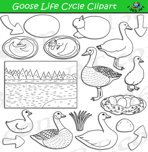Goose life cycle clipart black and white