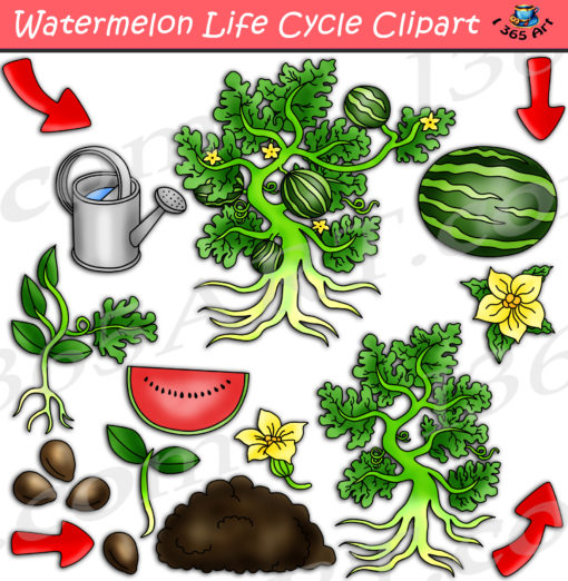 Watermelon life cycle clipart
