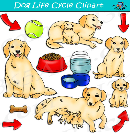Dog life cycle clipart