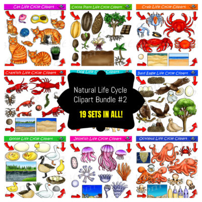 nature life cycle clipart bundle
