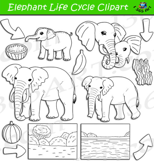 Elephant life cycle clipart black and white