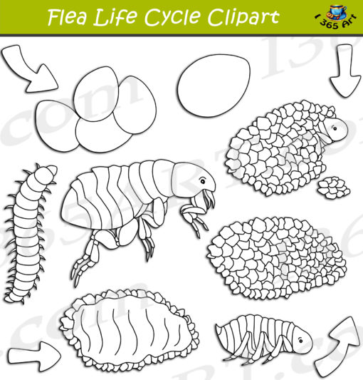 flea life cycle clipart black and white