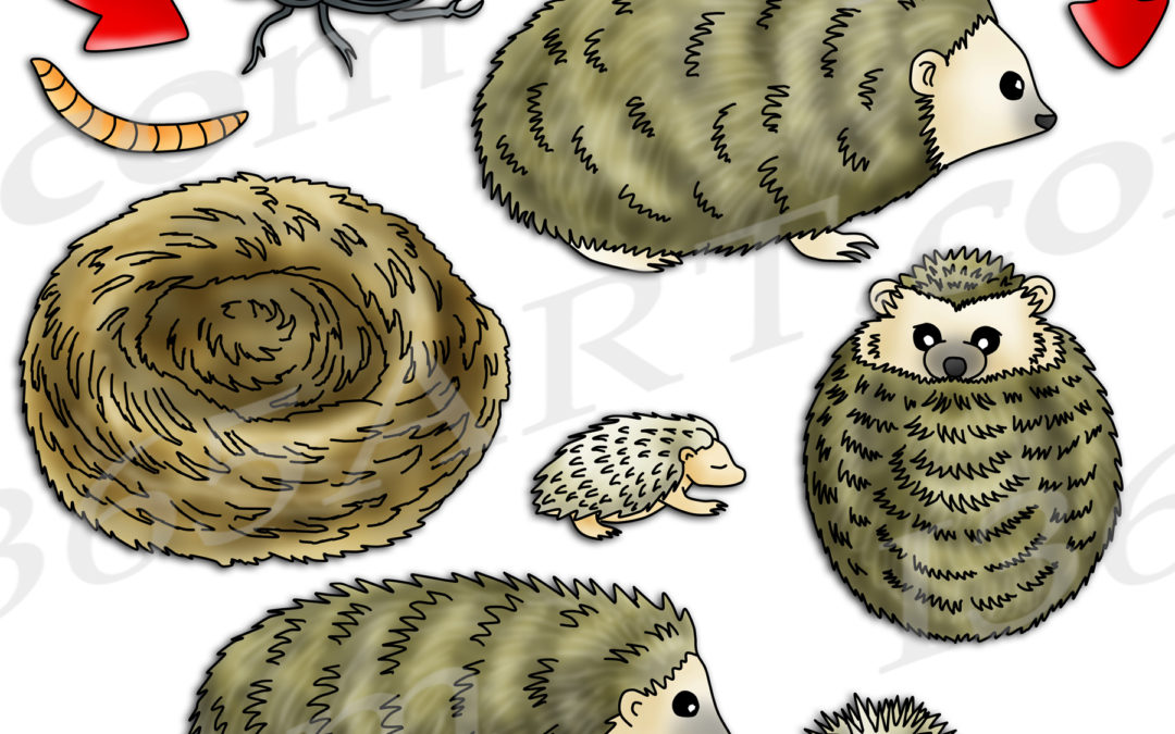 Hedgehog Life Cycle Clipart Set Download