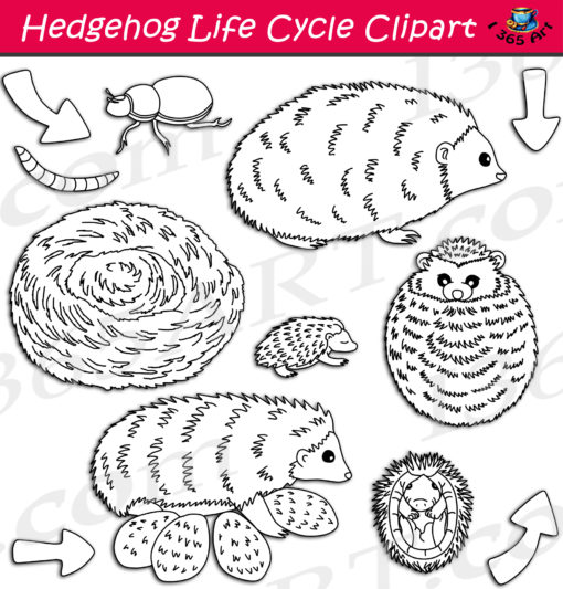 hedgehog life cycle clipart black and white