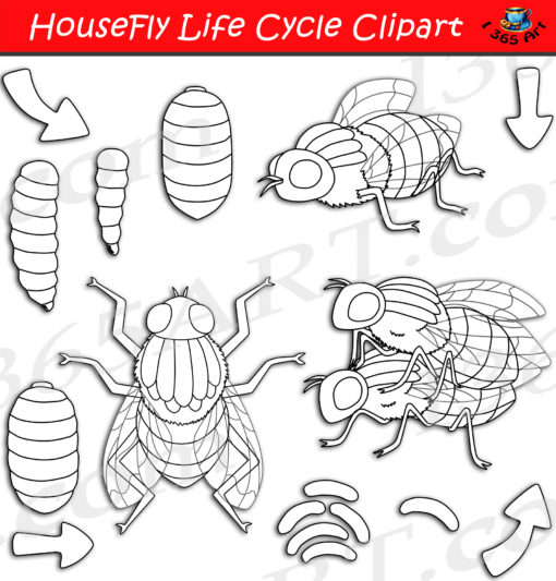 Housefly life cycle clipart black and white