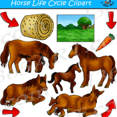 Horse life cycle clipart