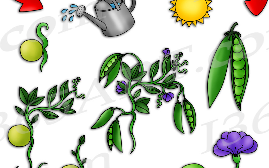 Pea Plant Life Cycle Clipart Set Download