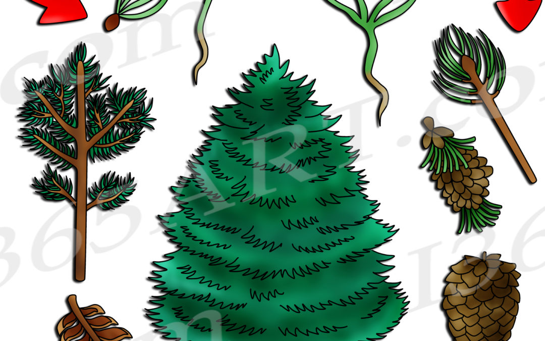 Pine Tree Life Cycle Clipart Set Download