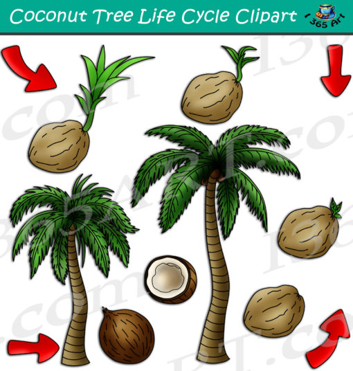 Coconut Tree Life Cycle Clipart