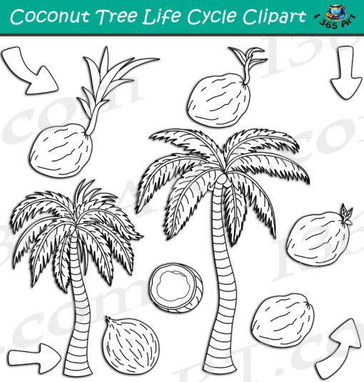 Coconut Tree Life Cycle Clipart black and white