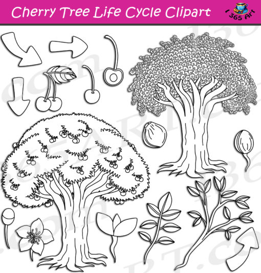 cherry tree life cycle clipart black and white