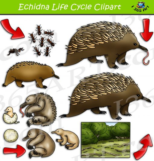 Echidna Life Cycle Clipart