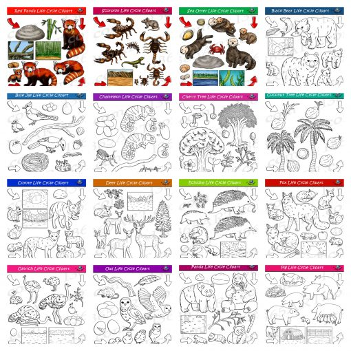 nature life cycle clipart pack 4