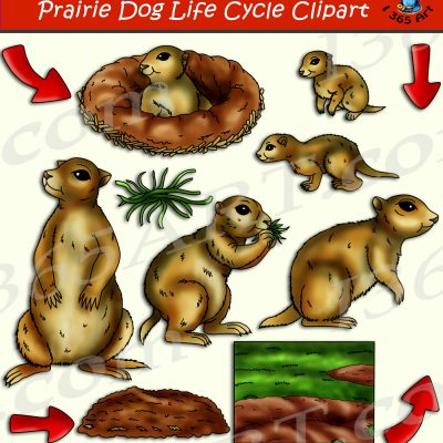 Prairie Dog Life Cycle Clipart