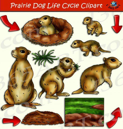 Prairie Dog Life Cycle Clipart
