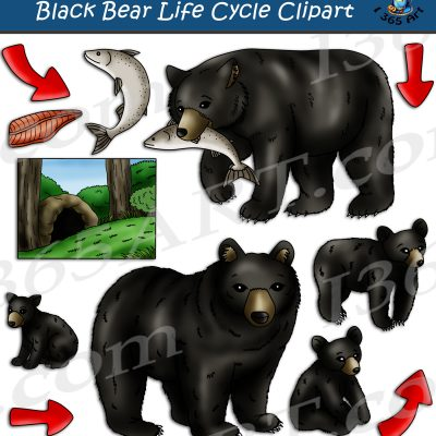 Black Bear Life Cycle Clipart