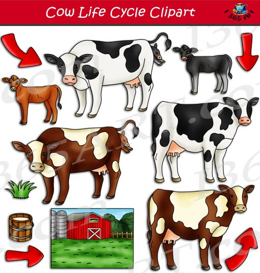 Cow Life Cycle Clipart