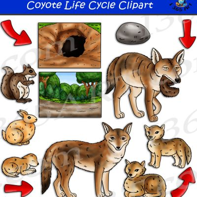 Coyote Life Cycle Clipart