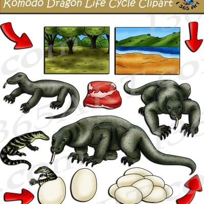 Komodo Dragon Life Cycle Clipart