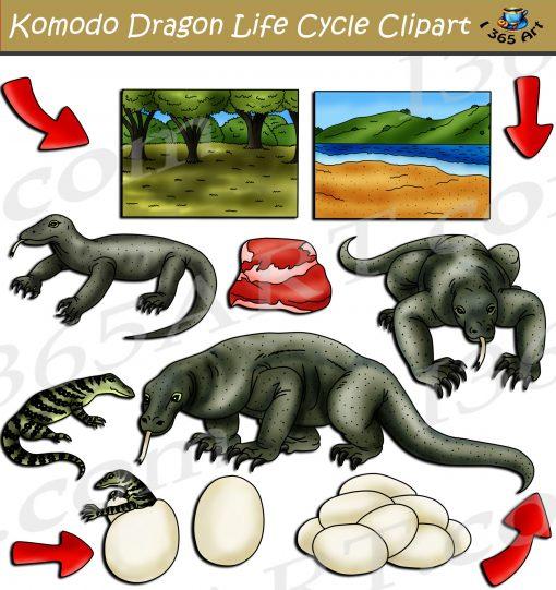 Komodo Dragon Life Cycle Clipart